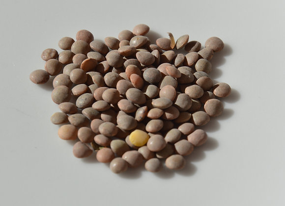 Spanish lentil