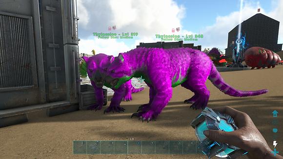 348/319 Unleveled Breeding Pair Joker Thylas