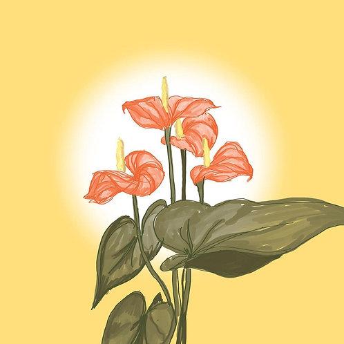 Glowing Anthurium