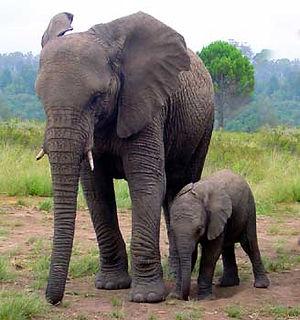 elephant-mom.jpg