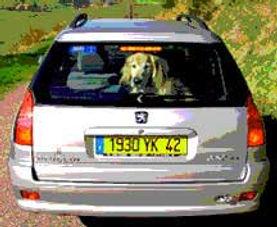 rear_window.jpg