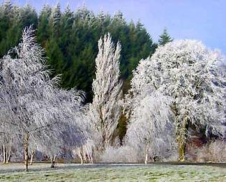 frosty-trees.jpg