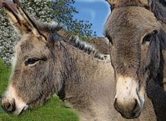 relais_donkeys.jpg