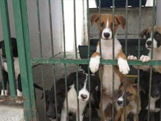 Discriminação baseada em peso e canis