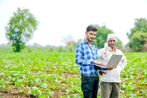 agronomist with farmer at cotton field.j