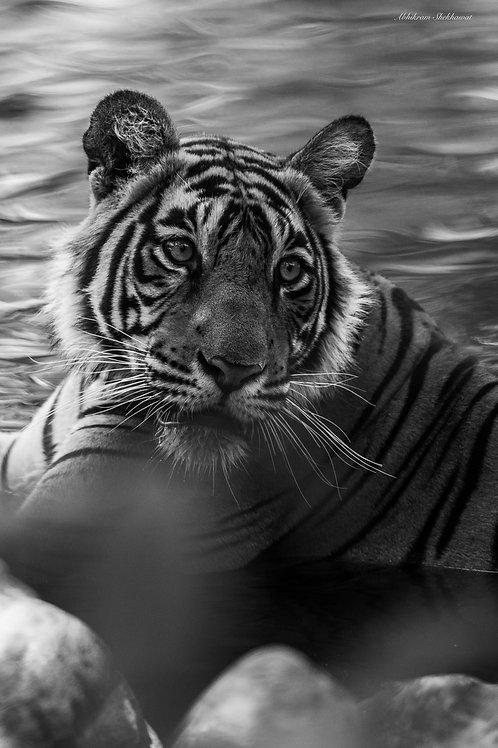 Wildlife, Artist: Abhikram Shekhavat