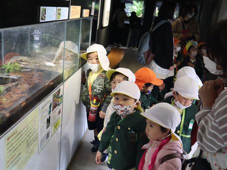 年少:遠足(カワセミ水族館)