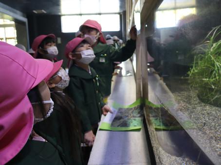 年長:遠足(カワセミ水族館)