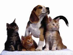 dogsandcats2