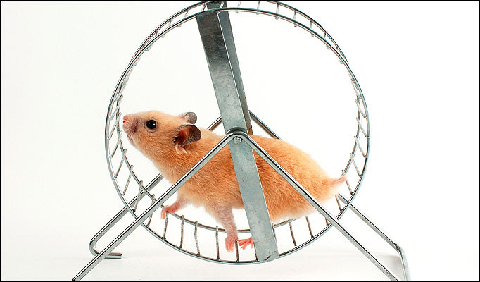 promo 2 hamster