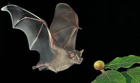 June 2021 - Bats helping us restore pastures @MPNR