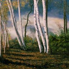 birches eastern USA