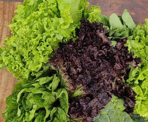 Lettuce Mix (160 gms)