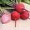 Thumbnail: Chioggia (Candy Cane) Beet (500 Gms)