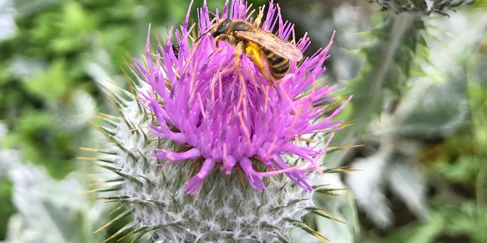 Insektenhotel Workshop