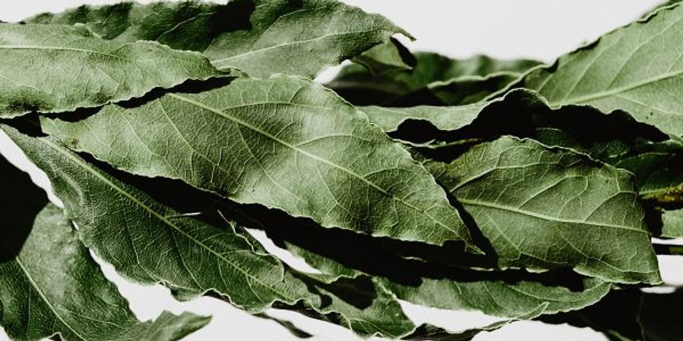 Pflanzentag: Lorbeer