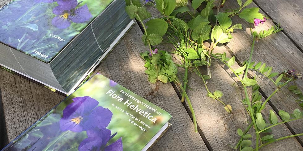 Übungstag Pflanzenbestimmung