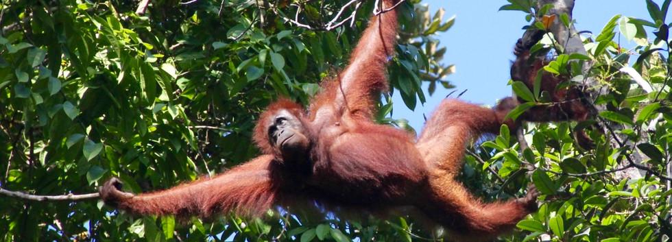 Borneo 2015