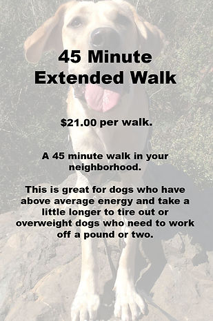 45 Minute Dog Walk