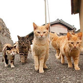 marching Cats.jpg