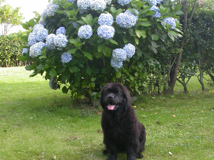 Arwen 5 meses, Astúrias/Arwen 5 months, Astúrias