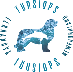 LOGO TURSIOPS COMPLETO.png