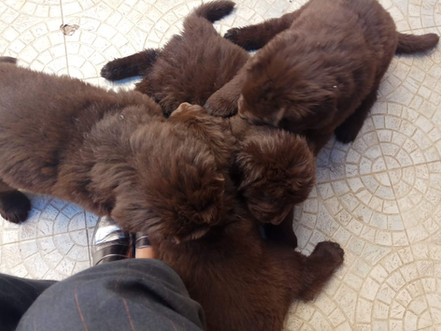 Litter: 4 Litle Puppies Playing