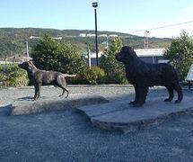 Estátuas de cães da raça terranova e labrador, raças com património comum, uma proveniente da ilha da Terranova e outra da adjacente península do Labrador.