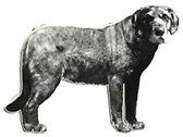 Dalbohund da Suécia