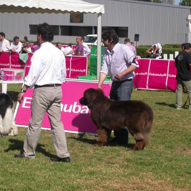 Lisboa Dog Show