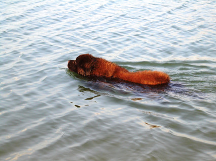 Praia de Pontal de Musgos, Gãmbia-Setúbal, 1 de Maio de 2020 / Pontal de Musgos Beach, Gâmbia-Setúbal, May the 1fst 2020