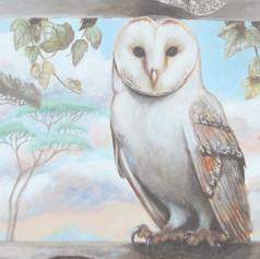 Barn owl in a window