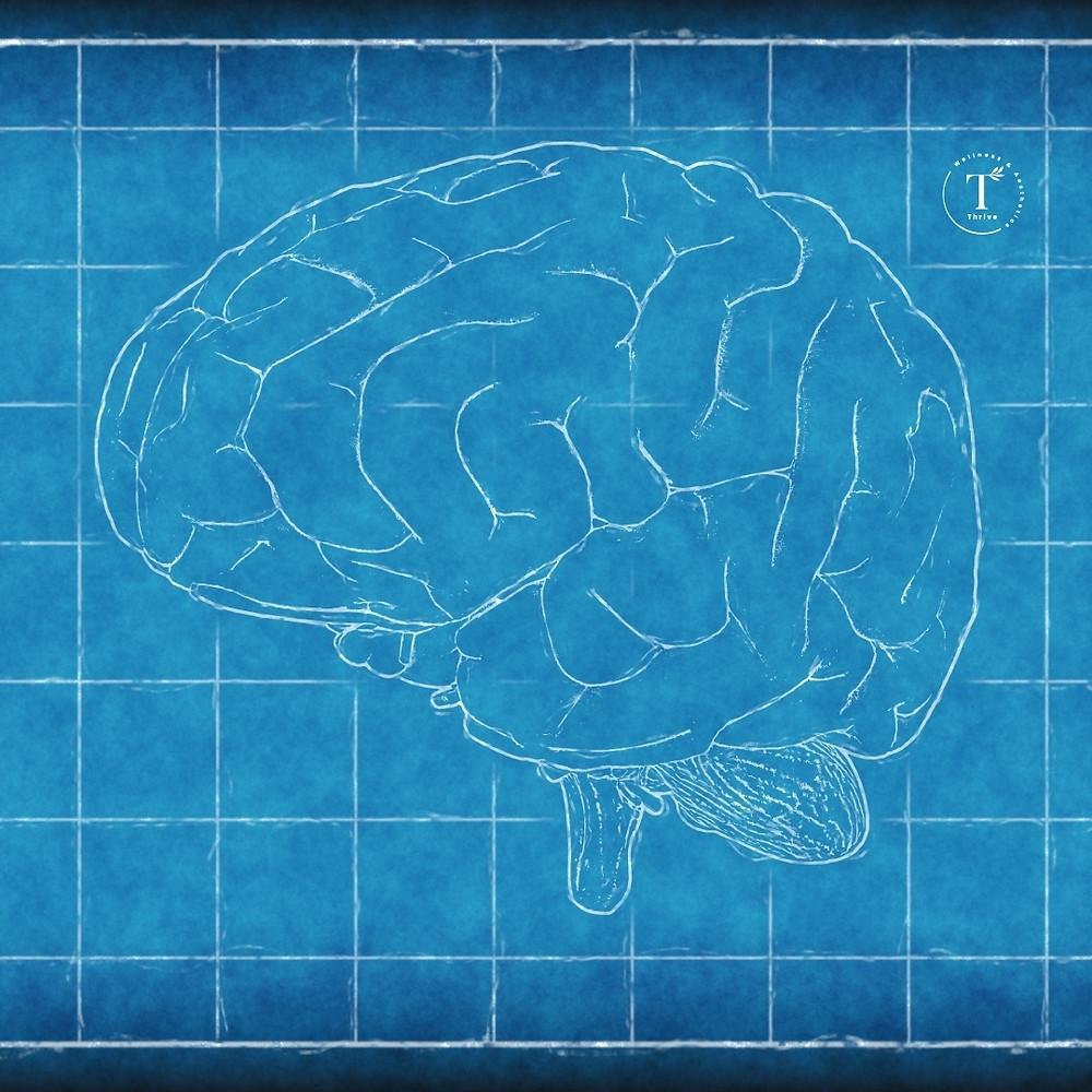 สมองกับGABA