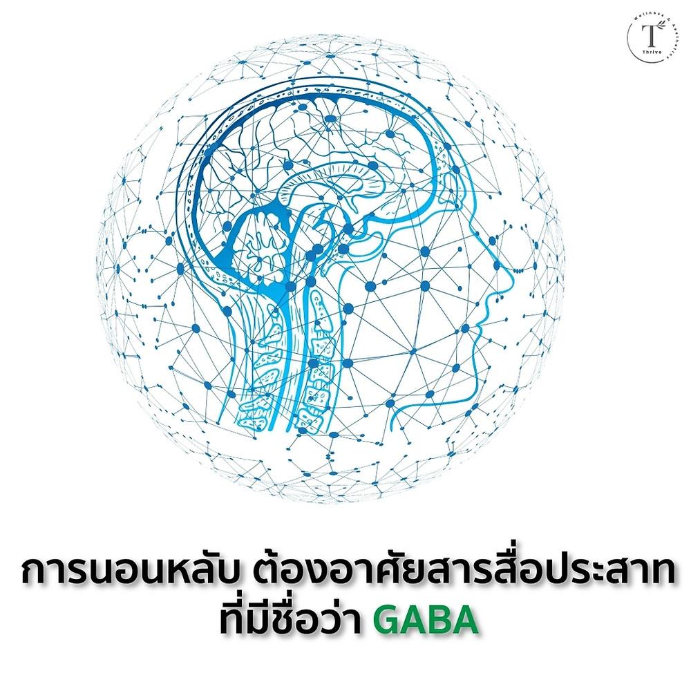 การนอนหลับต้องอาศัยสารสื่อประสาท GABA