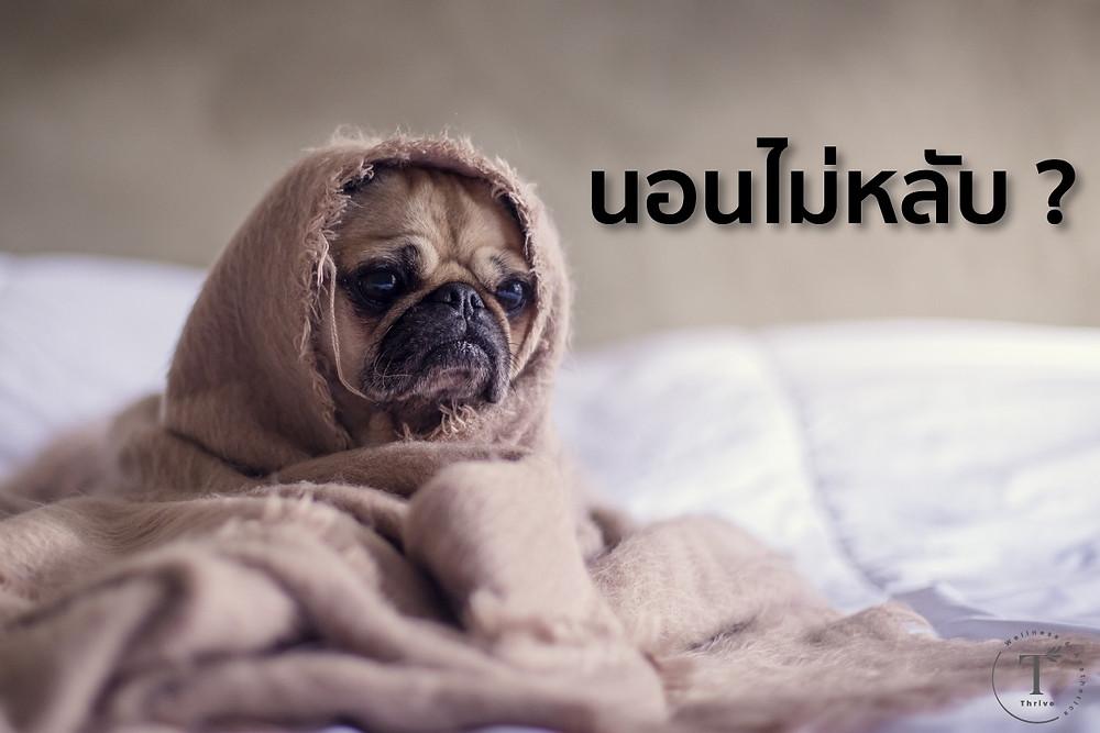 นอนไม่หลับcannot-sleep-moody-DOG-in-the-bed