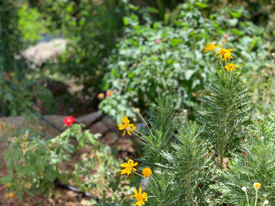 Detalle de los jardines de los salones de celebración