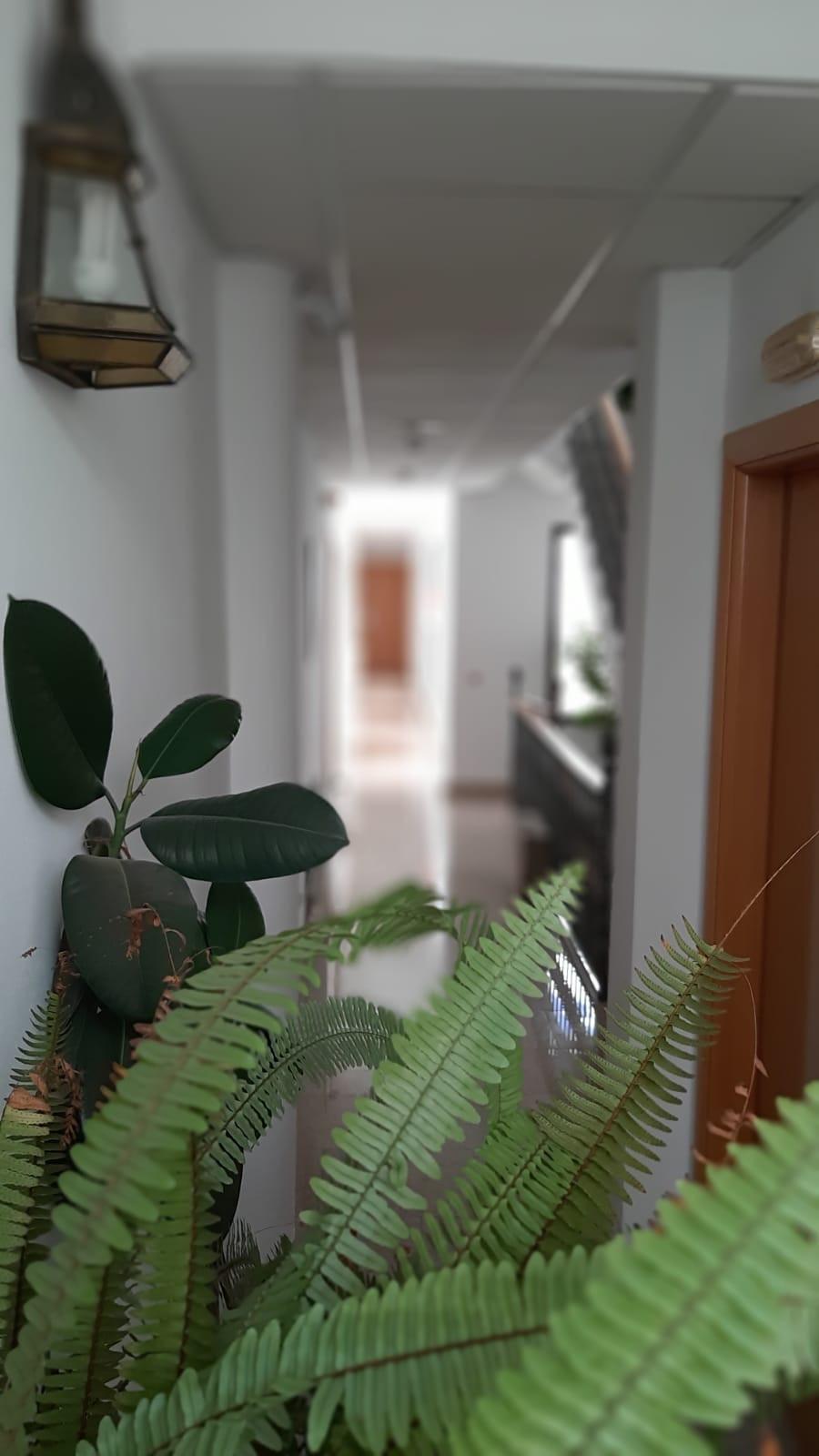 pasillo plantas.jpg
