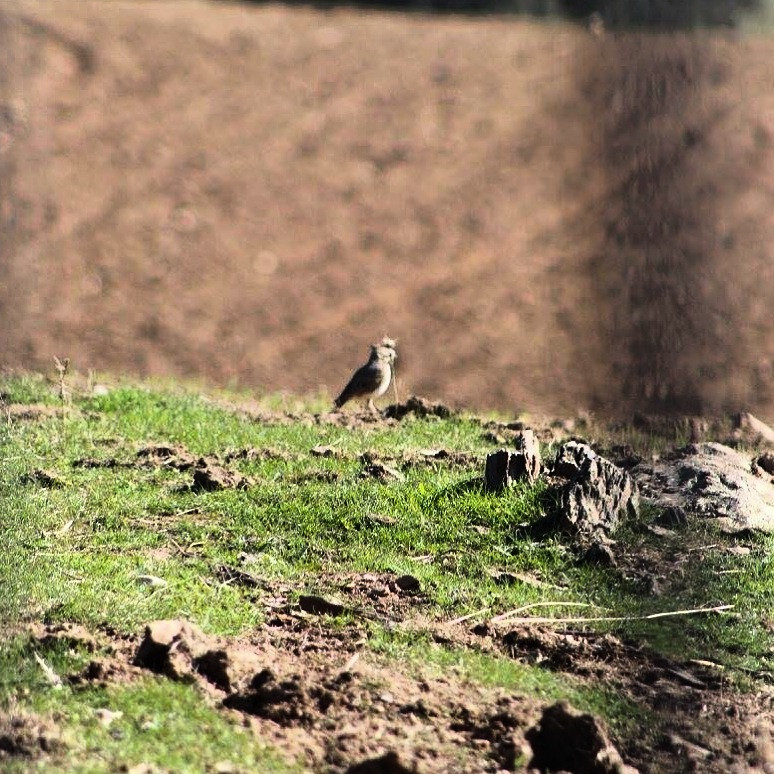 Aves en invernada