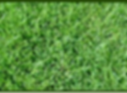extrem grass.png