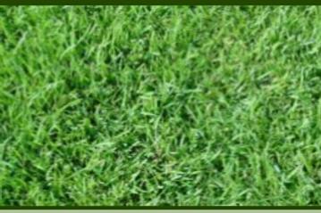 Extrem Grass
