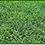 Thumbnail: Bermuda Grass
