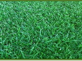 miranda grass.png