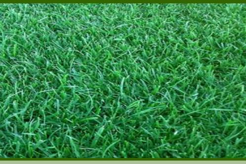 Miranda Grass