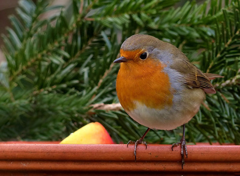 Proyecto Robin. Todos necesitamos un hogar seguro.