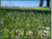 fussion grass_2.png
