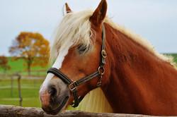 Seguro de caballo y galopa seguro.