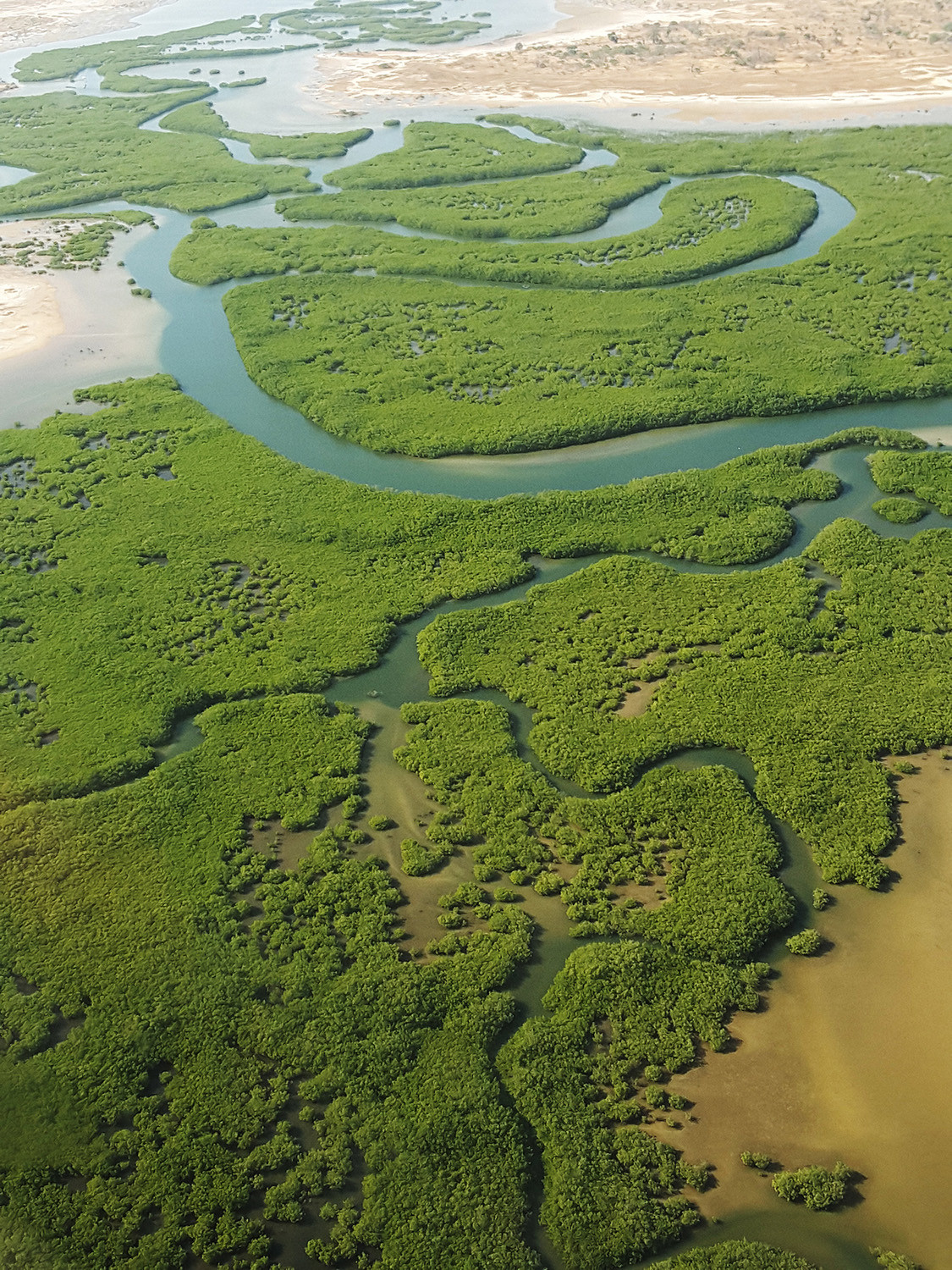 The mangrove of Sine Saloum