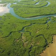 The mangrove of Sine Saloum