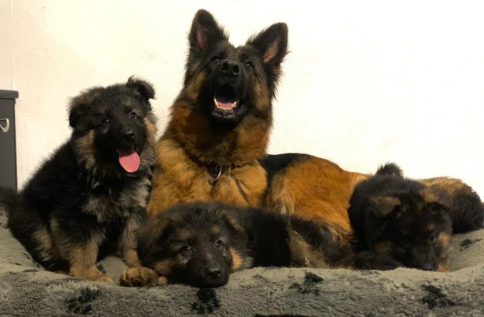 4 new puppies