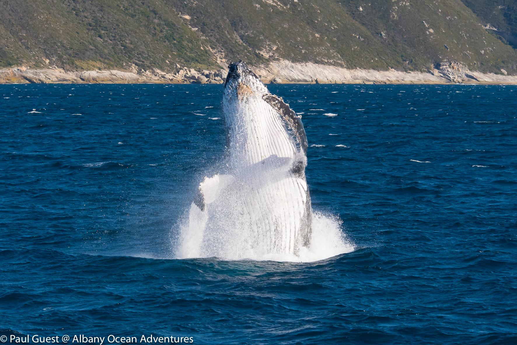 Humpback Whale-2019-07-17-232